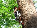 Jungle Xtrem Adventures Park : Conquer the height